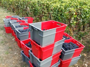 22 cases of Chambolle-Musigny 1er Cru Les Feusselottes is all we had - one barrel