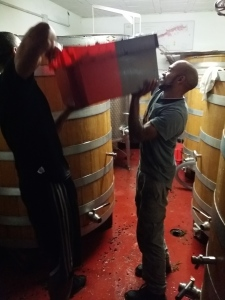 Richard and Demitrius lifting destemmed fruit into tanks